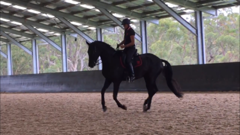 Georgie Girl Skipping along in the canter