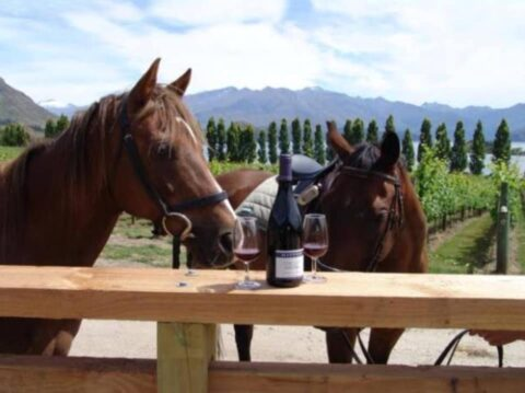 2 Horses with a bottle of good wine like good friends