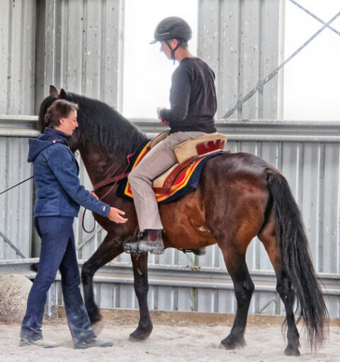 Paso Fino stallion Rev
