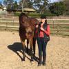 bay gelding with proud owner