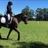 bay mare in balance with a lovely kind rider