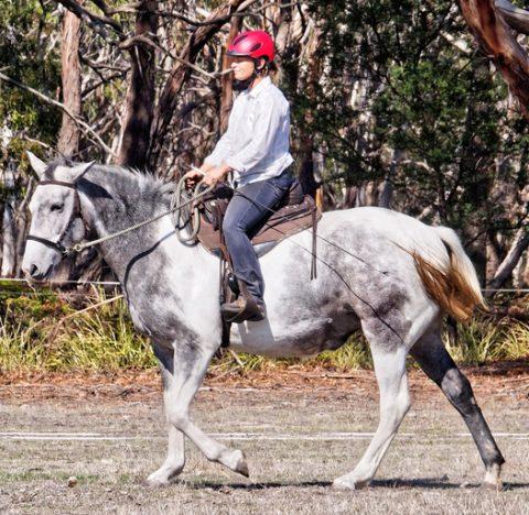 beautiful grey mare