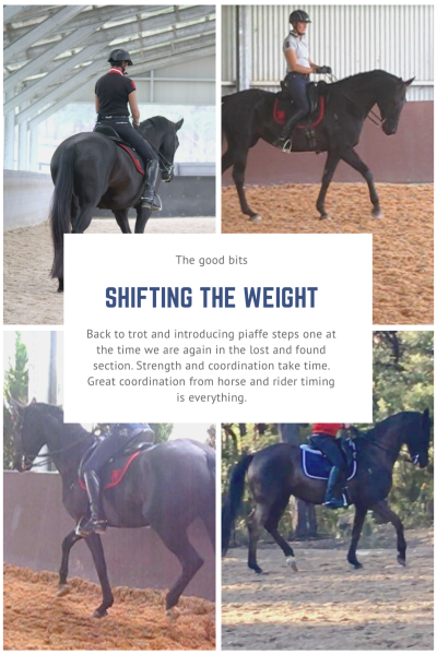 black mare filling out and looking stronger less angular