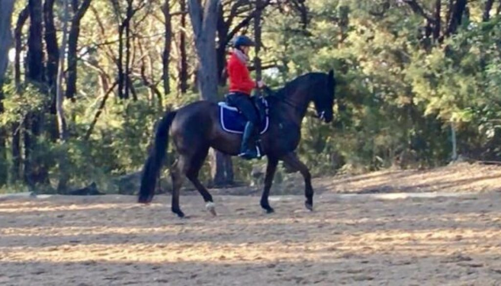 Anke Hawke riding her own horse
