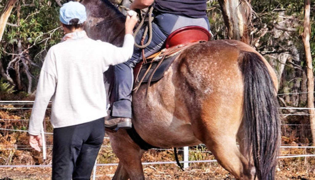 balance in the movement every rotation and shift of weight has an effect on the horse