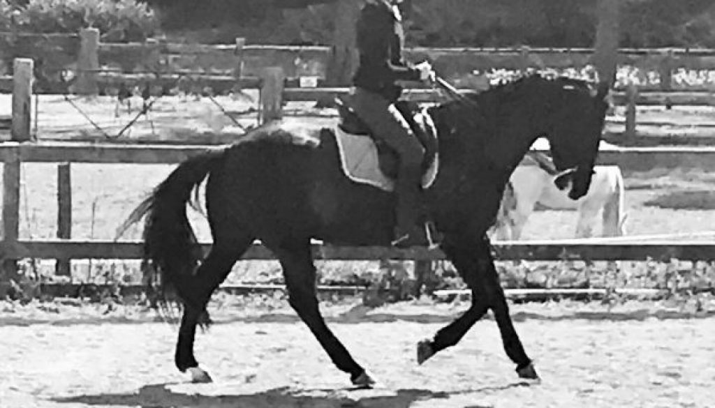 black and white photo showing a horse in a canter stride