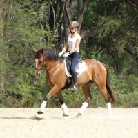 Thoroughbred in his second education healthy and in balance